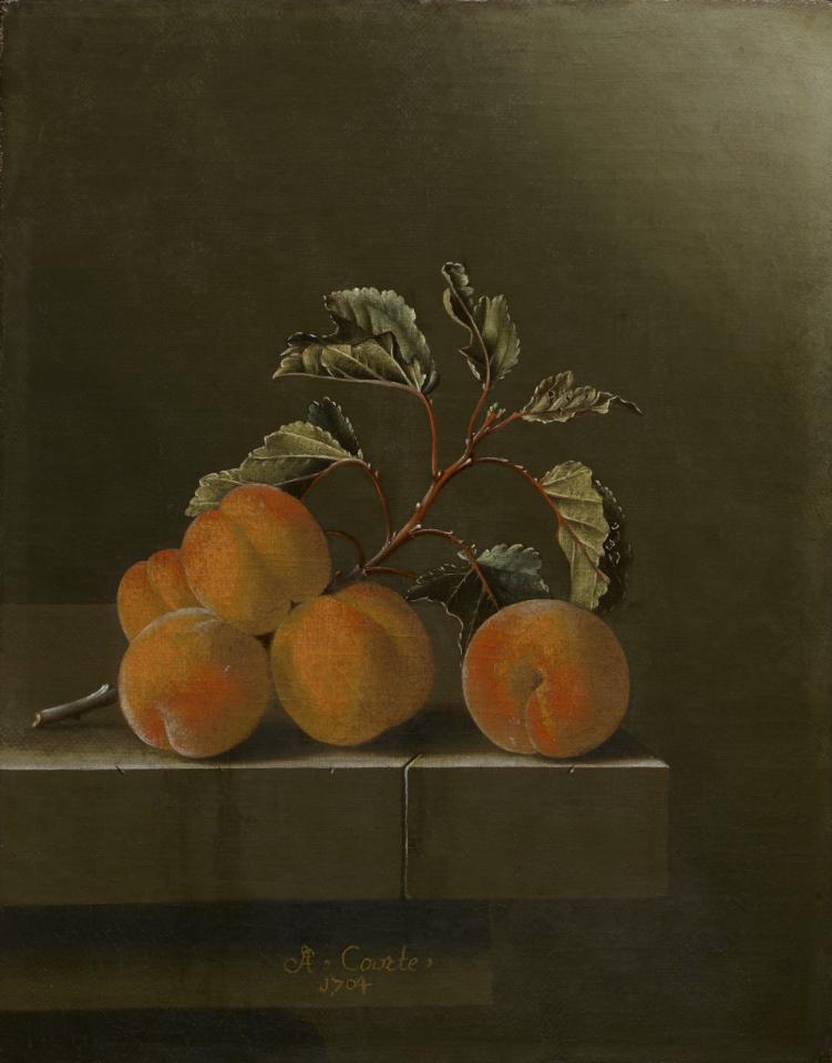 apricots_still life