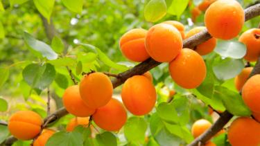 Nyhetsbrev från produktionsbolaget Apricot Stone